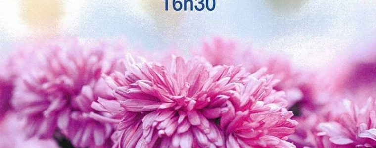 Un fleur pour la dignité